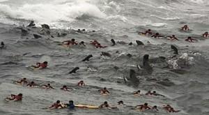Surfing school seals and kids